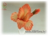 gladiolus_silkflora-info