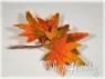Листья декоративного клена