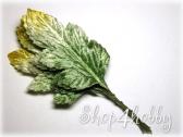 Листья хризантемы