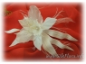 orhideya-io_silkflora-info
