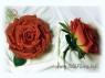 roza-sekret_silkflora-info