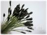 Тычинки реалистичные для тюльпана