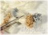 Тычинки металлик «сердечко»