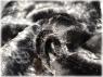 Вискоза «нерпа» 7 мм